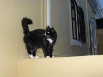 katt1020845