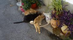 katt1090331