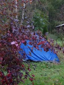 teltet tatt av vinden, campingturen slutt for i år.