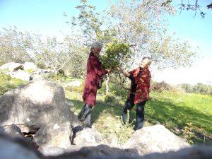 juletrehogst - medronho