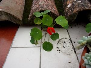 under en takstein kan man leve fint om man er en blomkarse.