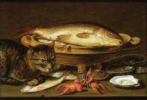 katt mat