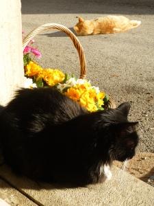 Sylvester passer døren ut mot gaten.