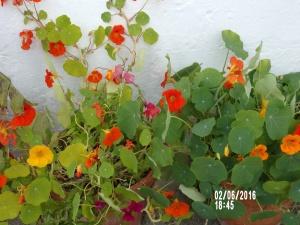 Blomkarse likt av både meg og sommerfugler